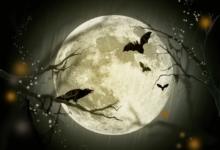 Photo of The Halloween Quiz